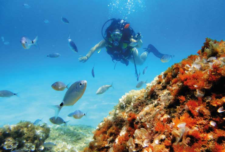 Diving Adventure Mallorca